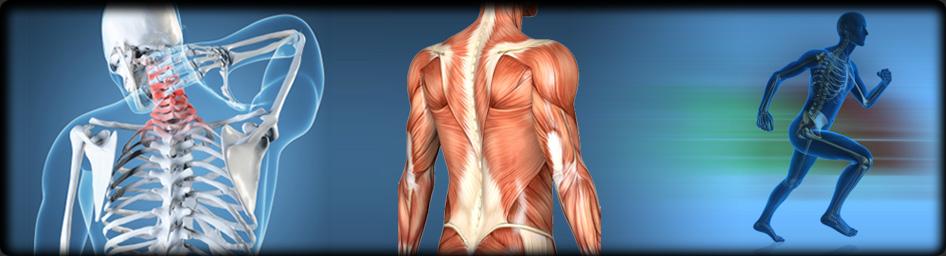 What is Orthopedics